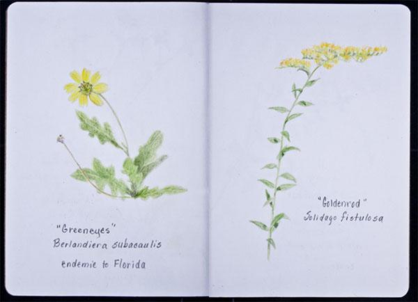 Holly-Genzen-sketchbook.jpg