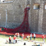 towerpoppies3.jpg