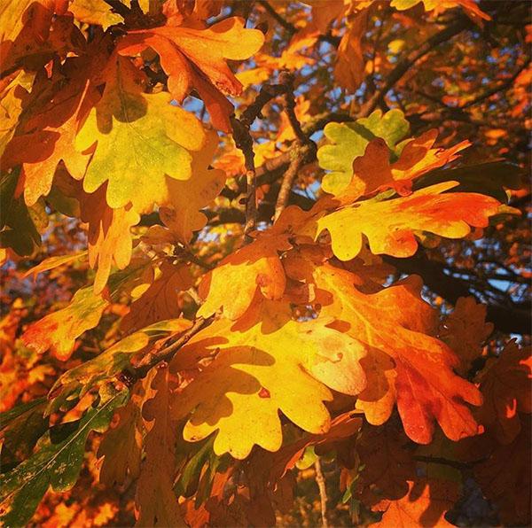 autumnleaves-orange.jpg