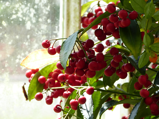 belfast-garden-11.jpg
