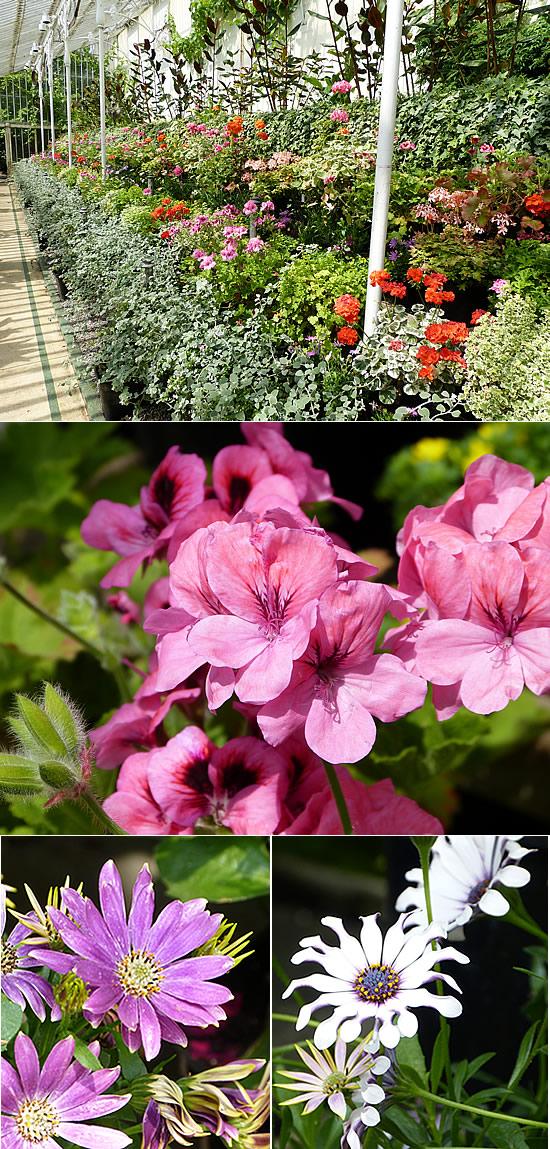 belfast-garden-15.jpg