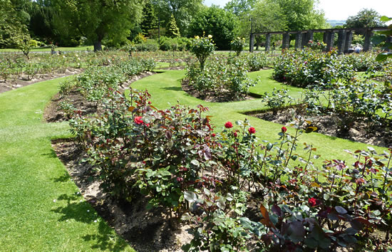 belfast-garden-17.jpg
