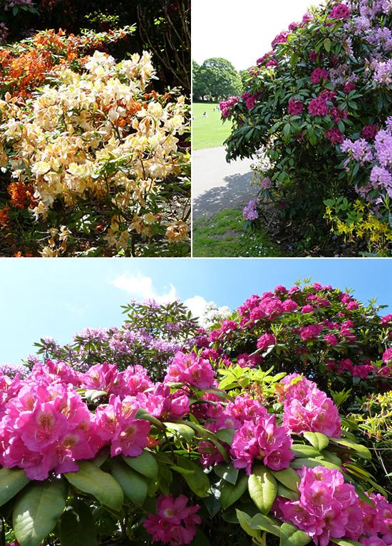belfast-gardens-17.jpg