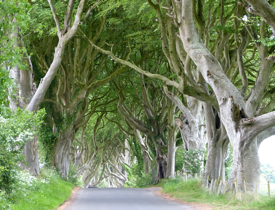 darkhedges01.jpg