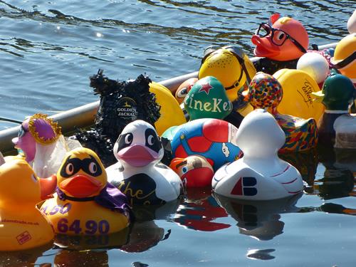 duck_norwich03.jpg