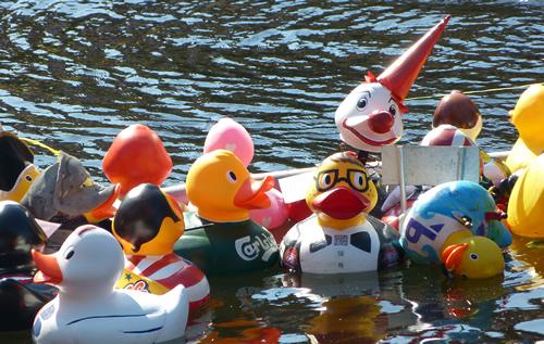 duck_norwich04.jpg