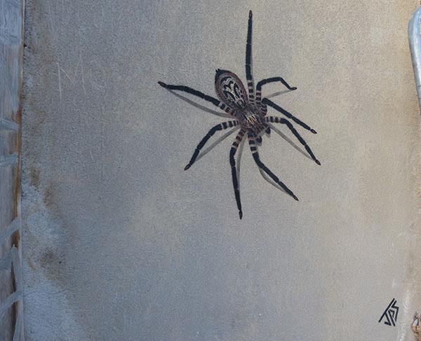 jps-spider.jpg