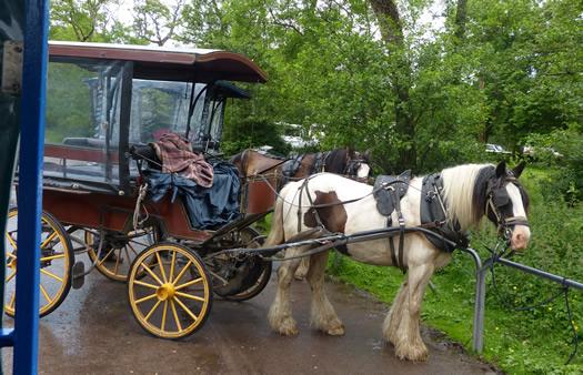 kilarney-horse01.jpg