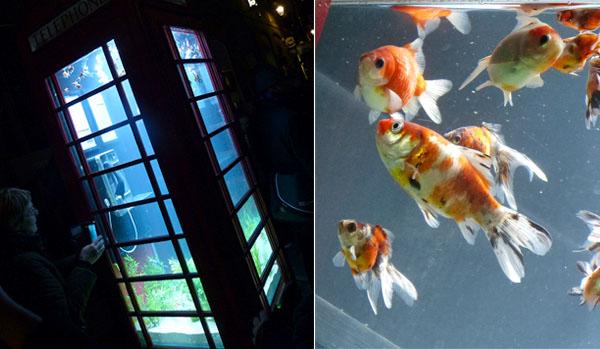 london-lumiere-aquarium.jpg