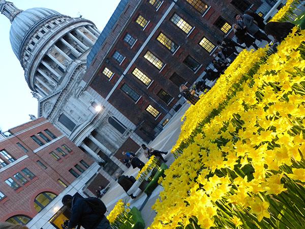 marie-curie-daffodils02.jpg