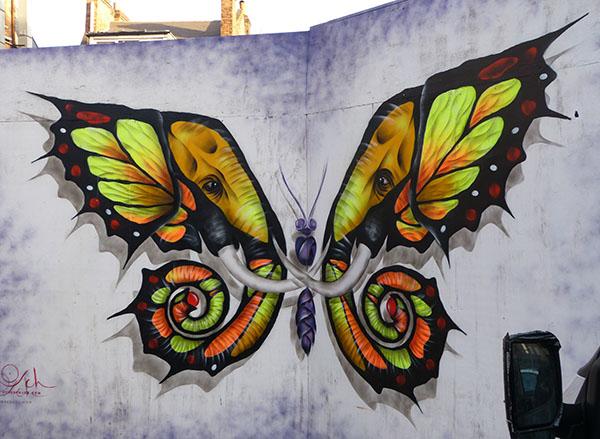 oscade-butterfly-1.jpg