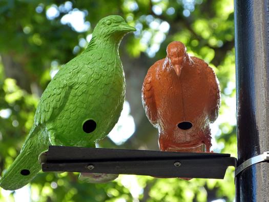 patrick-murphy-pigeon-1.jpg