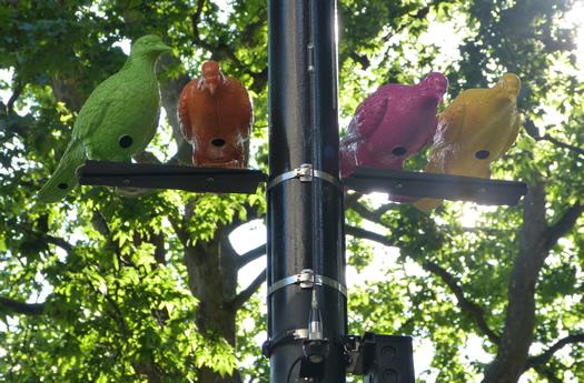 patrick-murphy-pigeon-2.jpg