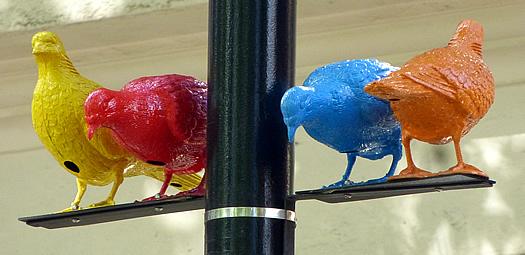 patrick-murphy-pigeon-3.jpg