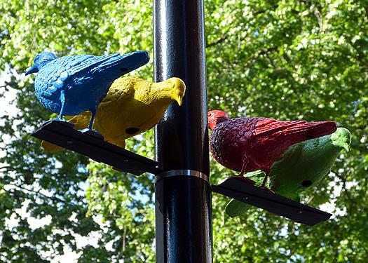patrick-murphy-pigeon-5.jpg