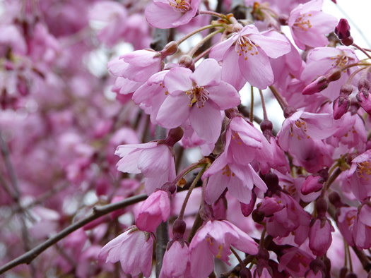 spring-london2015-01.jpg