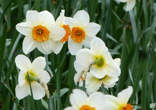 spring-london2015-10.jpg