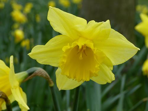 spring2013-6.jpg