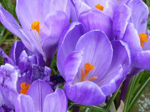spring2015-01.jpg