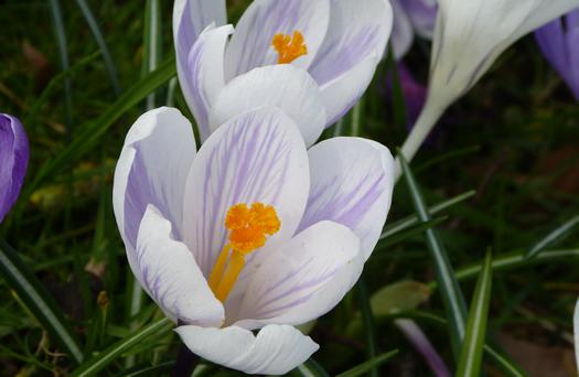 spring2015-03.jpg