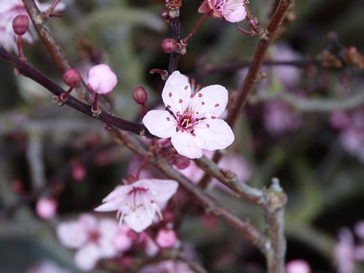 spring2015-04.jpg