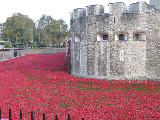 towerpoppies-01.jpg