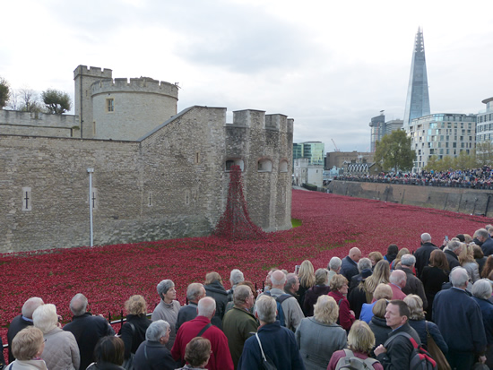 towerpoppies02.jpg