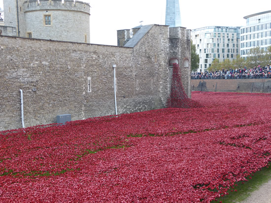 towerpoppies03.jpg