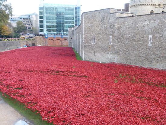 towerpoppies04.jpg