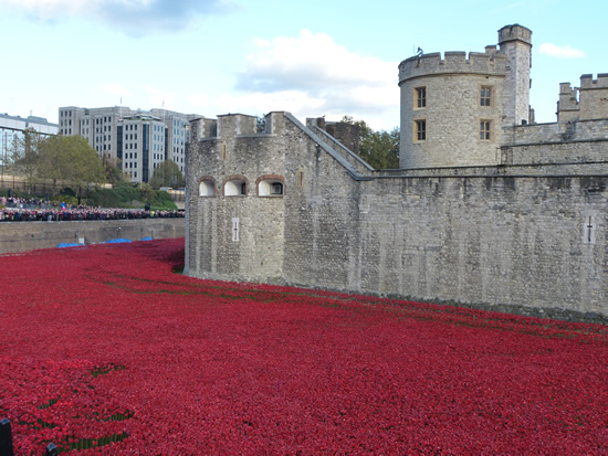 towerpoppies06.jpg