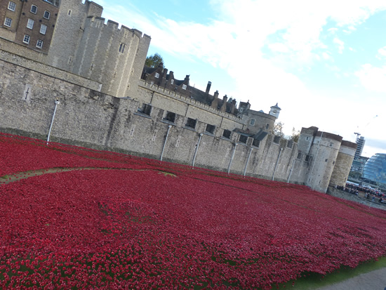 towerpoppies07.jpg