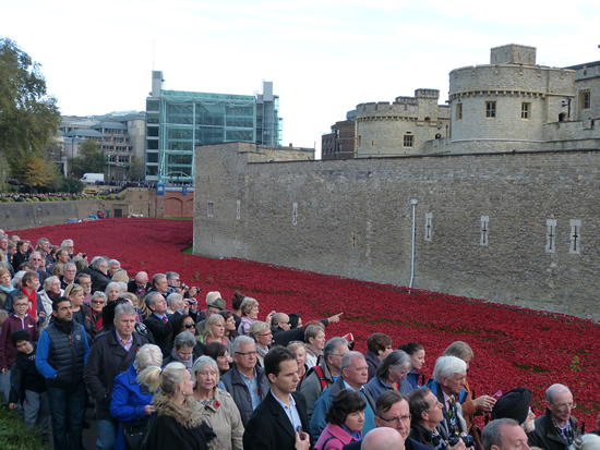 towerpoppies08.jpg