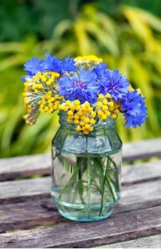 cornflowers_14.jpg