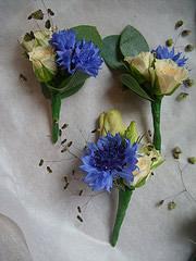 cornflowers_15.jpg